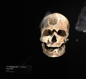 Real skulls from our ancestors, such as Cro-Magnon man, excavated in France are a highlight (author photo)