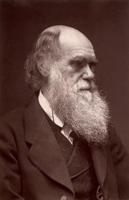 Darwin image