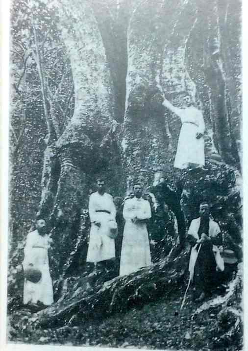 Jesuits with the oldest tree on the Palni Hills 1903 - Courtesy Rapinat Herbarium Trichy