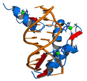 300px-Zinc_finger_DNA_complex