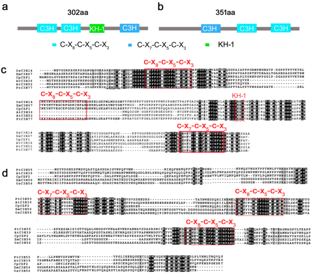 genes-08-00199-g001